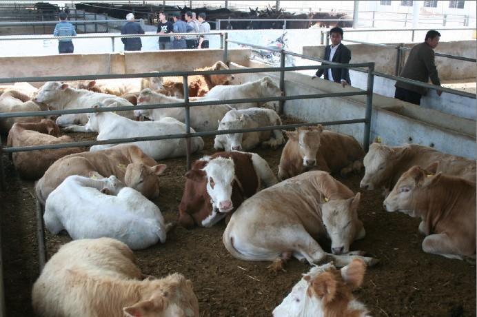 产品名称:牛圈建设设计图现代肉牛养殖场投资成本