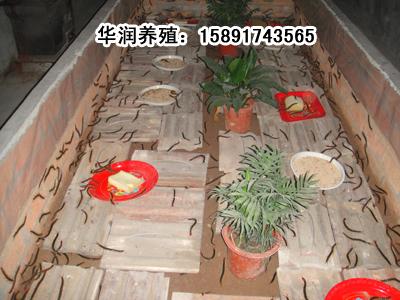 蚯蚓养殖箱制作图解