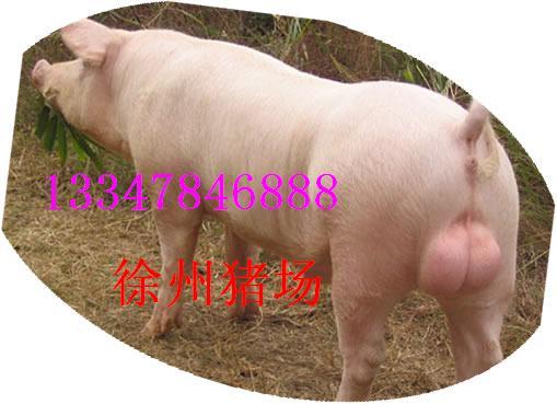 猪胎盘清洗步骤图片
