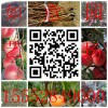 哪里有草莓苗哪里有草莓苗厂家衢州