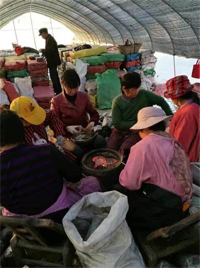 果洛藏族自治州灵芝破壁孢子粉做功效