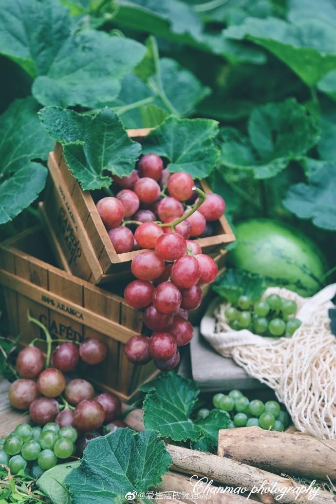 諮詢:台湾鄂爾多斯市批發葡萄苗