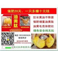 母雞長黃油是什麼原因  用什麼方法能讓雞快速長黃油