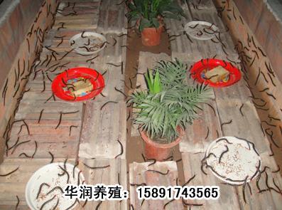 蝎子养殖技术 蝎子的养殖技术 图片