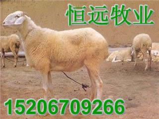 羊网中国养殖业波尔山羊小尾寒羊养殖基地提供全面的肉牛肉羊肉驴
