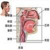 咽喉问题为什么要查鼻腔?